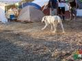 camp_dog.jpg